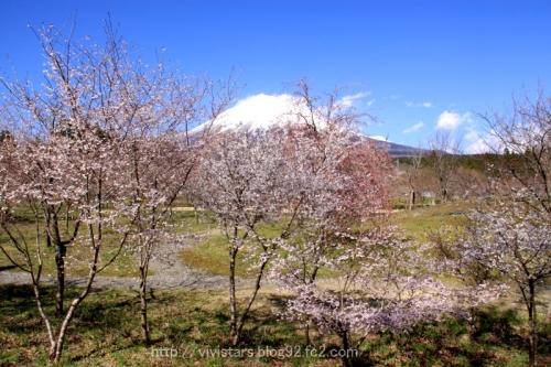 さくら園からの富士山