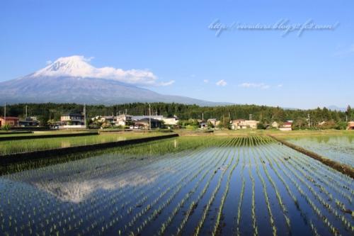 富士宮の田園風景
