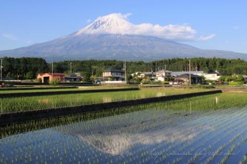 田んぼの逆さ富士2014