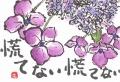 紫陽花 001