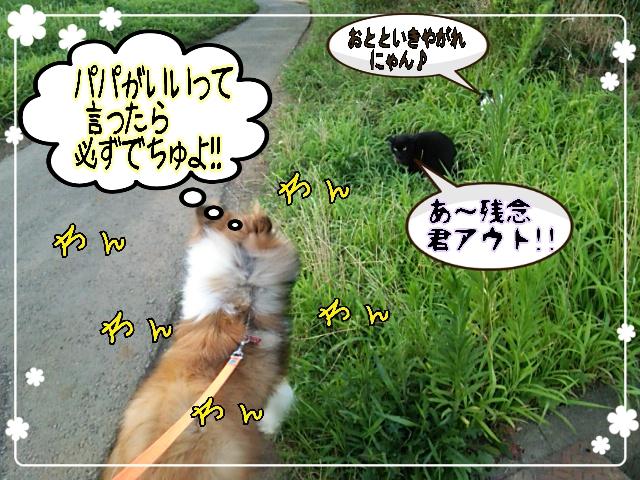 2014-07-29-11-27-37_deco.jpg