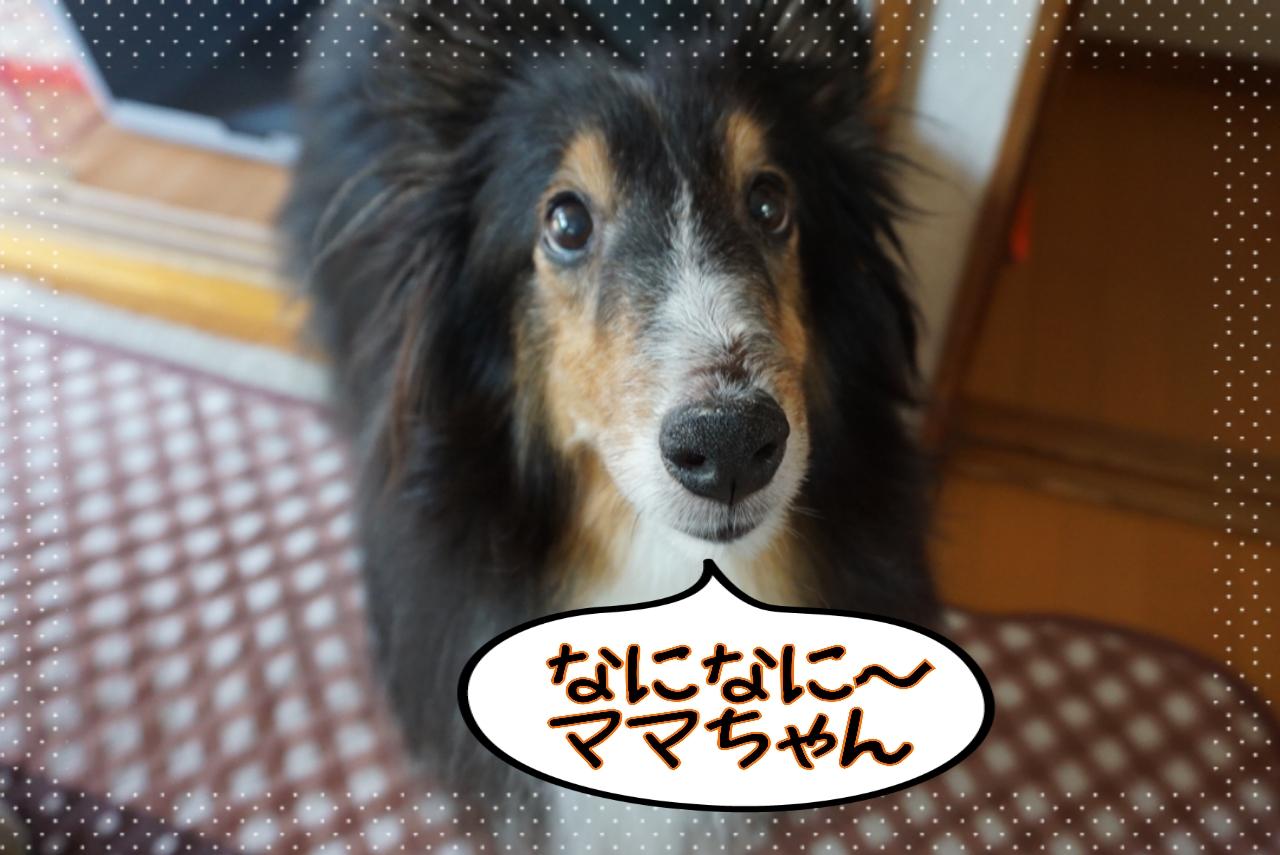 2014-07-29-12-57-37_deco.jpg