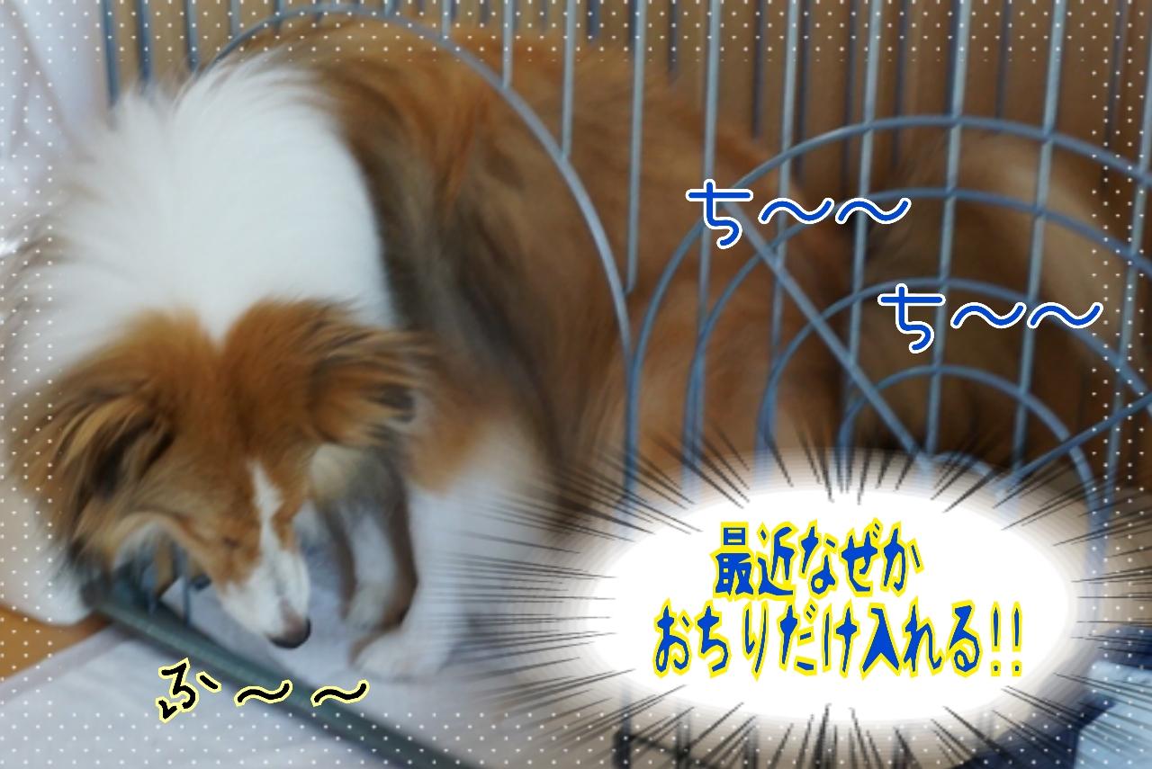 2014-07-29-16-20-32_deco.jpg