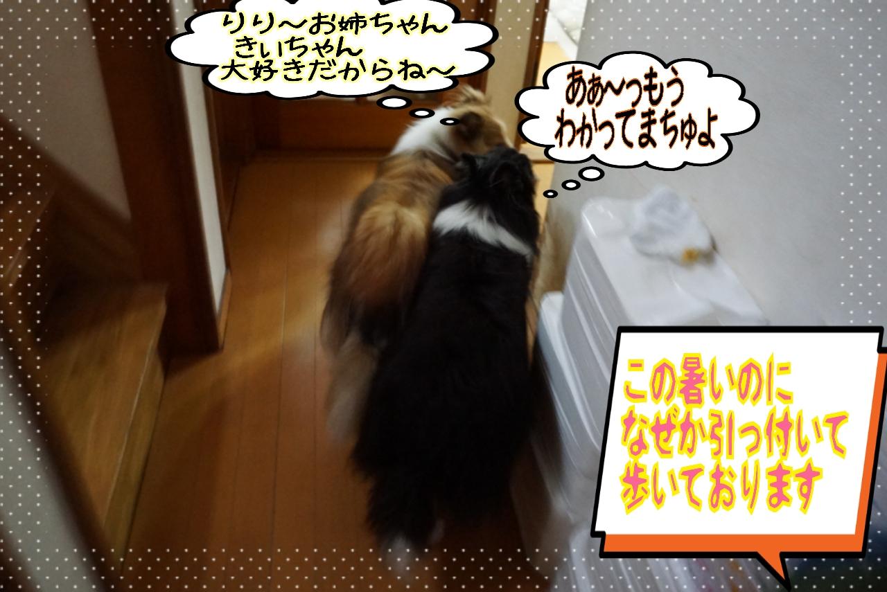 2014-08-13-05-37-04_deco.jpg