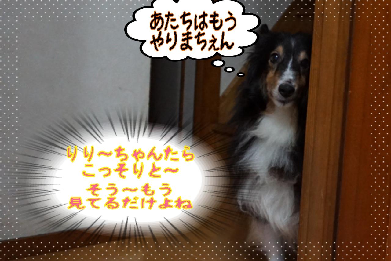 2014-08-13-06-29-34_deco.jpg