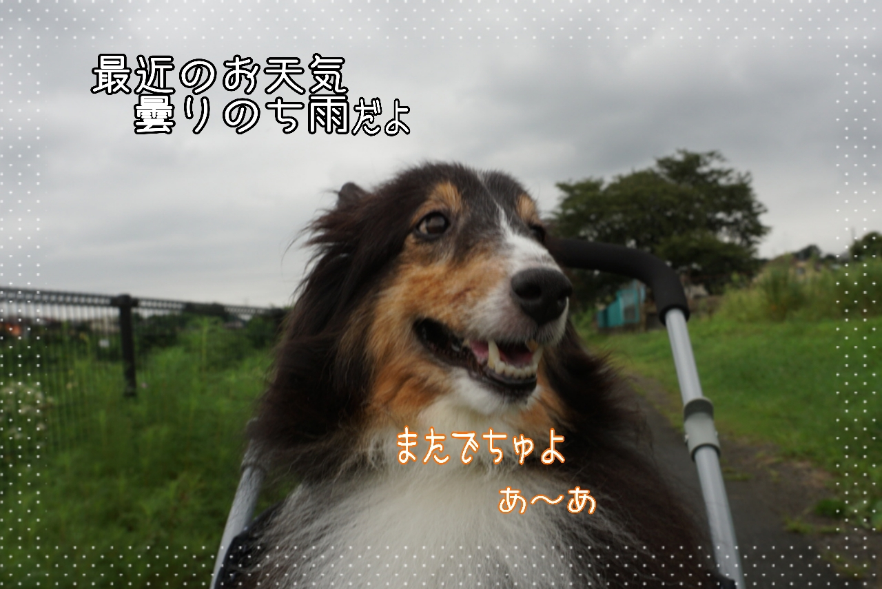 2014-08-29-01-03-20_deco.jpg