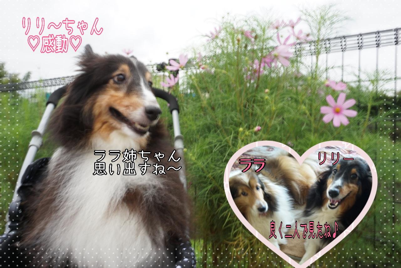 2014-08-29-01-22-29_deco.jpg