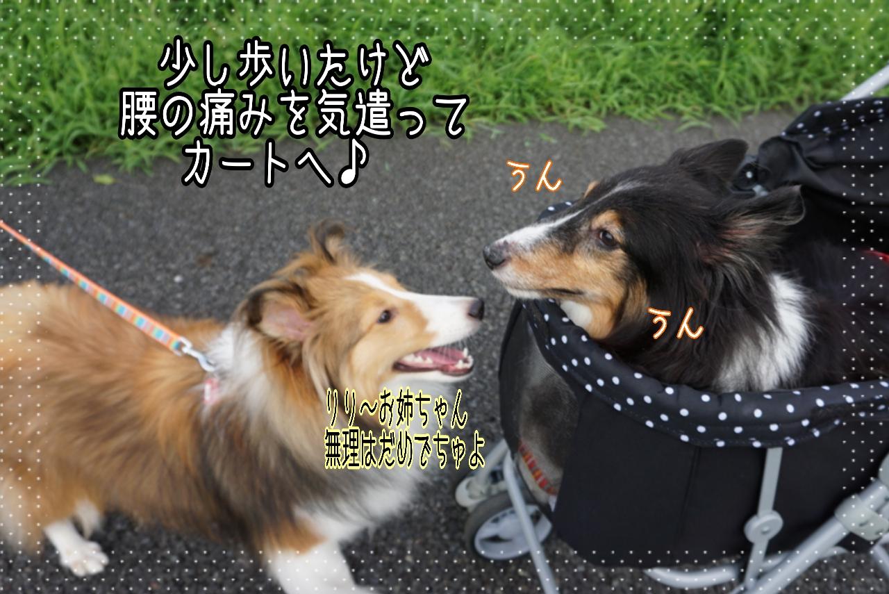 2014-08-31-01-17-33_deco.jpg