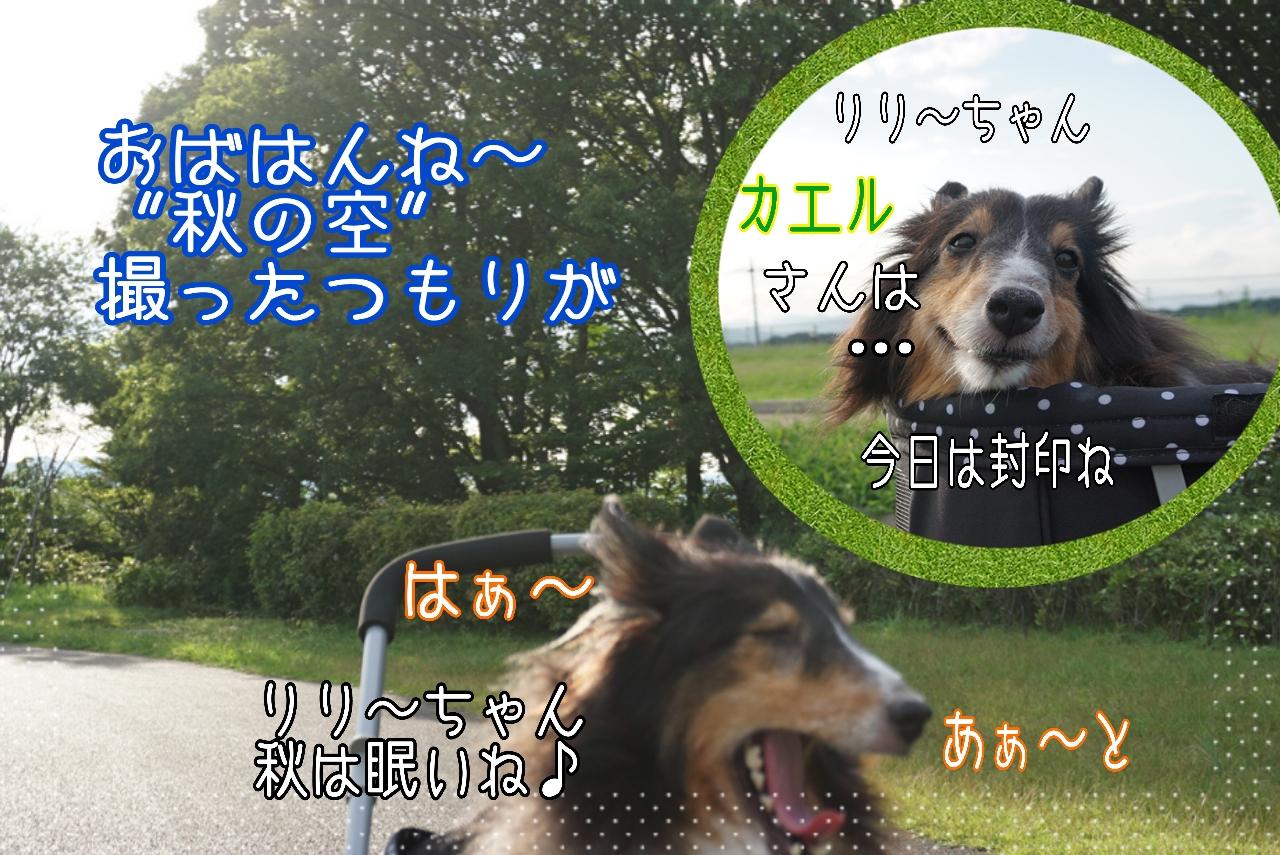 2014-08-31-10-31-47_deco.jpg