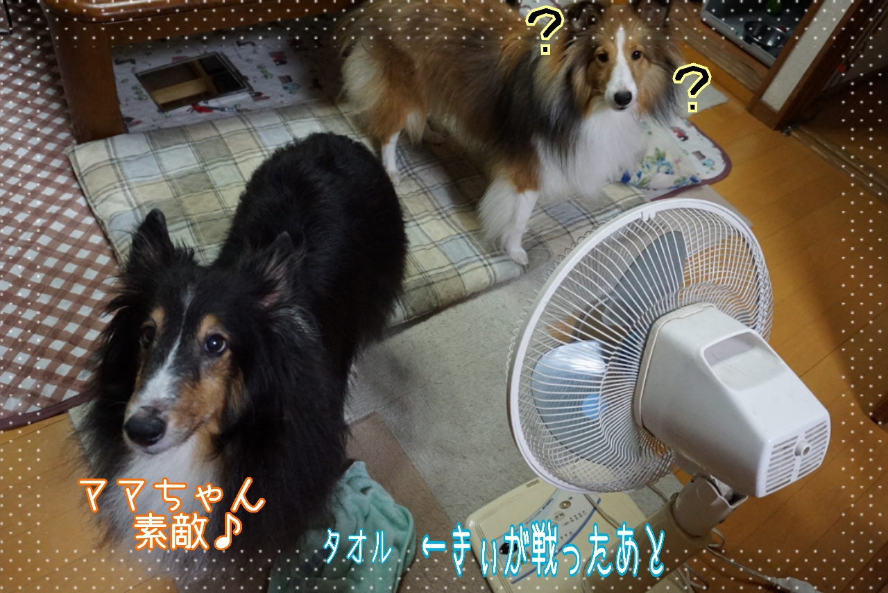 2014-09-06-00-40-55_deco.jpg