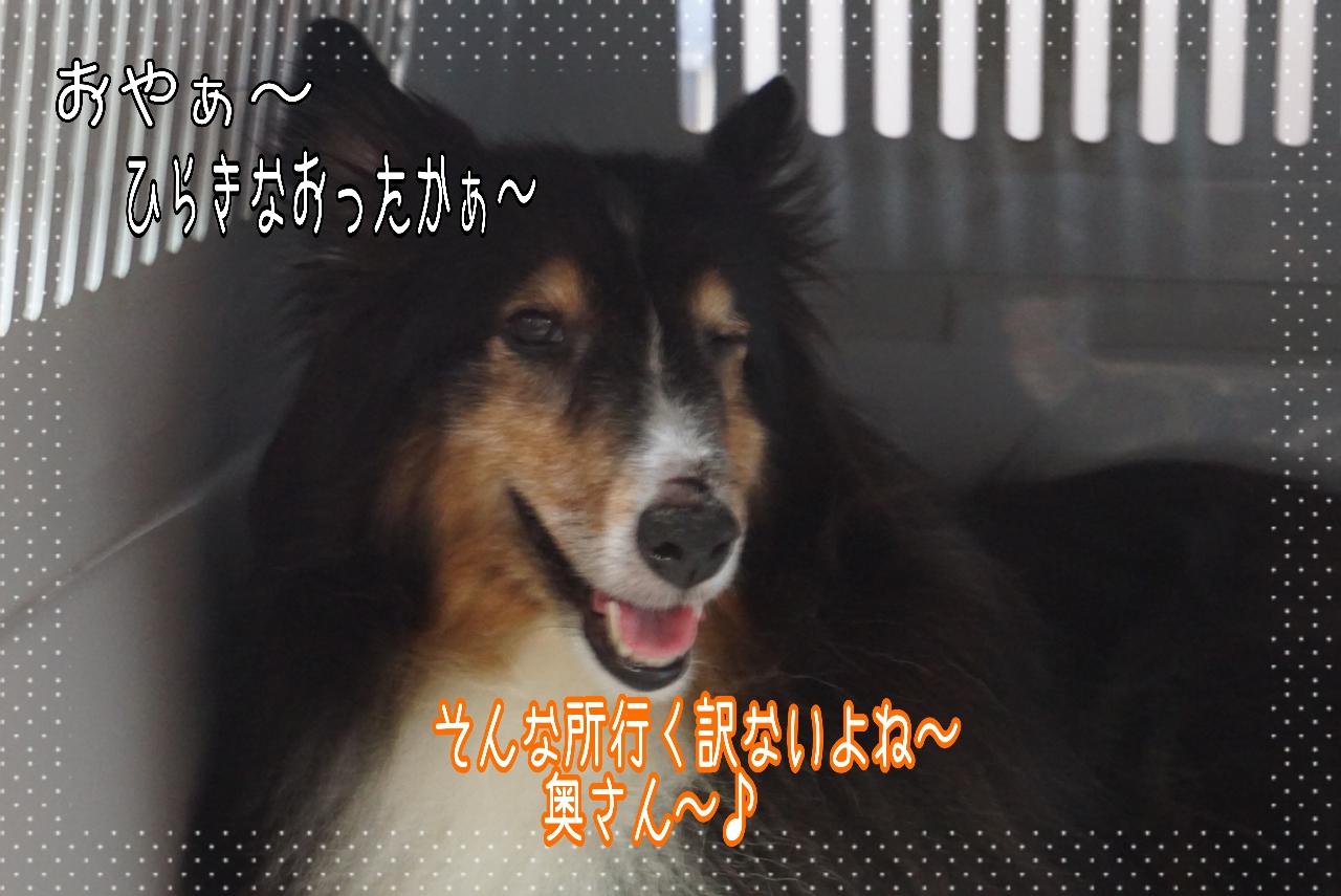 2014-09-07-07-35-23_deco.jpg