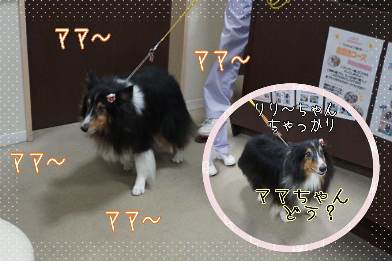 2014-09-07-15-46-52_deco.jpg