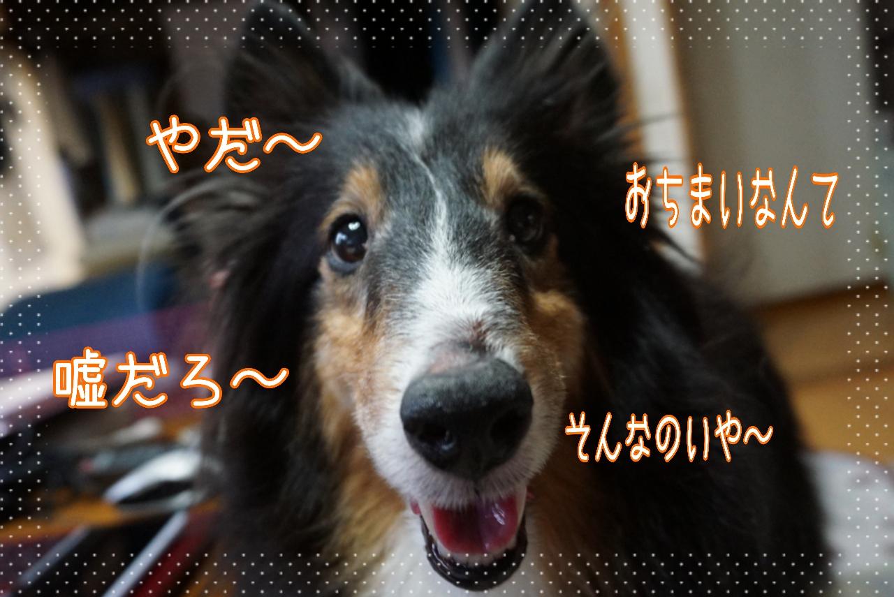2014-09-09-04-56-27_deco.jpg