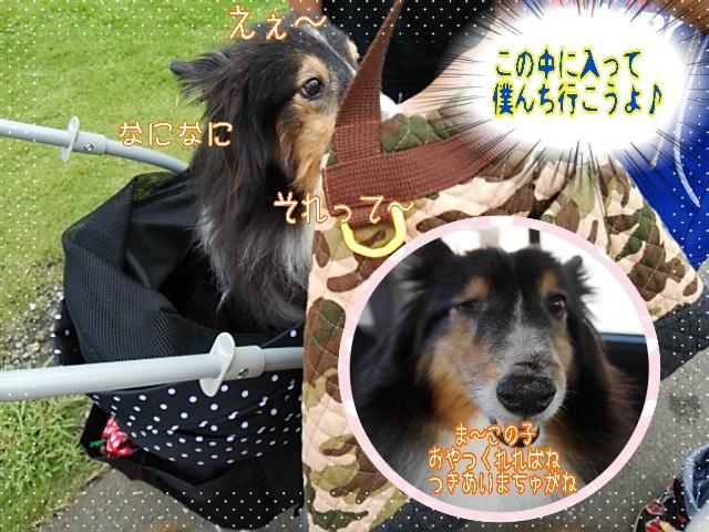 2014-09-09-06-56-04_deco.jpg