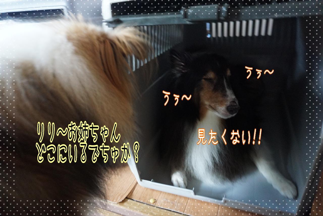 2014-09-13-01-31-13_deco.jpg