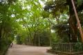 下鴨神社2