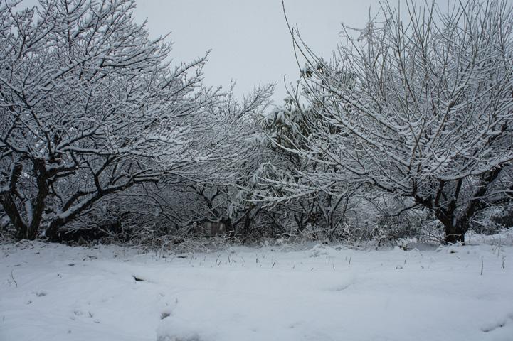雪景色の梅