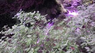 水俣の滝2014-5-17 (4)