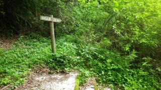 水俣の滝2014-5-17 (2)