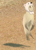 白クマ帽子 オットセイ 魚遊び 6