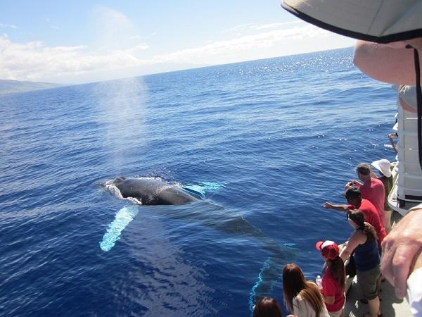クジラ4 会心作