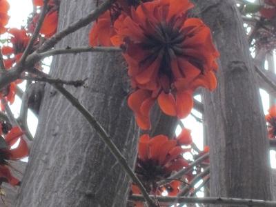 知らない木の花