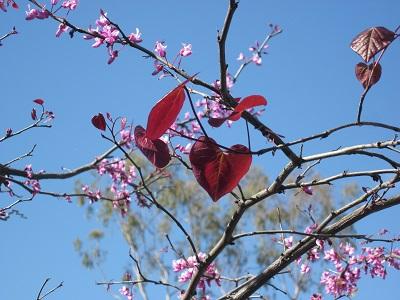 ハートの葉っぱ1