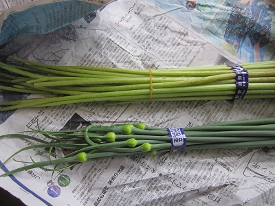 ふきとニンニクの茎