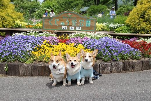 くじゅう花公園1 2014-5-18-2