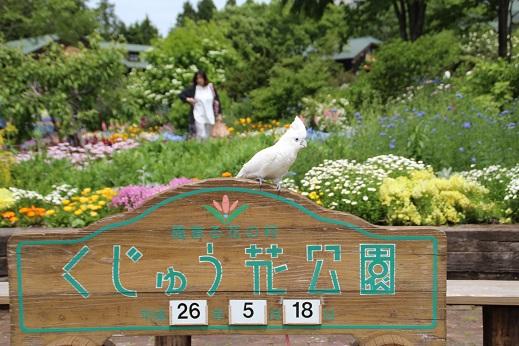 くじゅう花公園1 2014-5-18-3