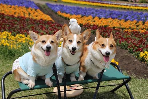 くじゅう花公園1 2014-5-18-5