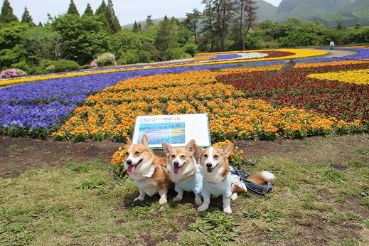 くじゅう花公園1 2014-5-18-8
