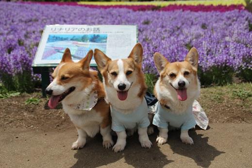 くじゅう花公園1 2014-5-18-9