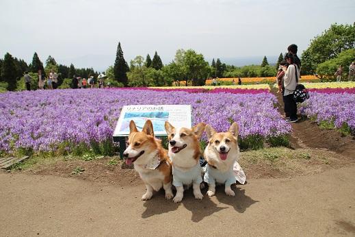 くじゅう花公園1 2014-5-18-10
