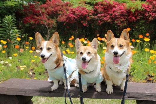 くじゅう花公園2 2014-5-18-6