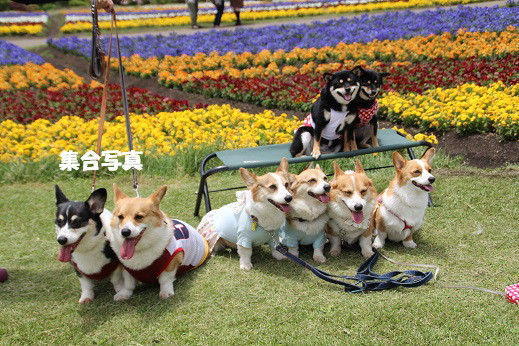 くじゅう花公園2 2014-5-18-11