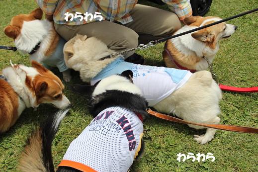 くじゅう花公園2 2014-5-18-12