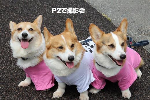 お散歩ウオッチングinP2久山 2014-5-25-1