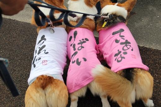 お散歩ウオッチングinP2久山 2014-5-25-2