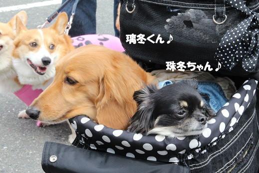 お散歩ウオッチングinP2久山 2014-5-25-4
