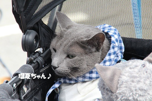 お散歩ウオッチングinP2久山 2014-5-25-5