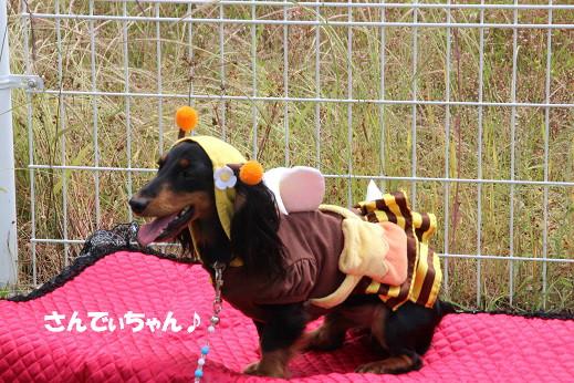 お散歩ウオッチングinP2久山撮影編 2014-5-25-1
