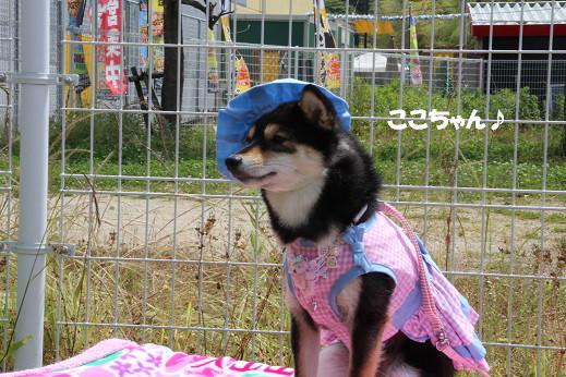 お散歩ウオッチングinP2久山撮影編 2014-5-25-4
