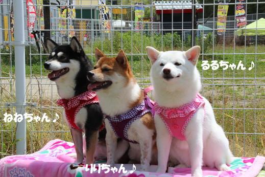 お散歩ウオッチングinP2久山撮影編 2014-5-25-5