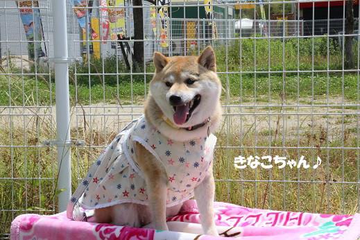 お散歩ウオッチングinP2久山撮影編 2014-5-25-6