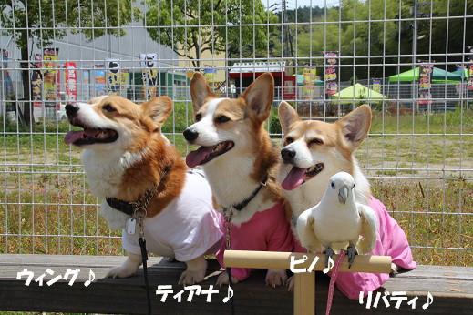 お散歩ウオッチングinP2久山撮影編 2014-5-25-8