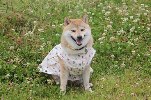 お散歩ウオッチングinP2久山撮影編 2014-5-25-9