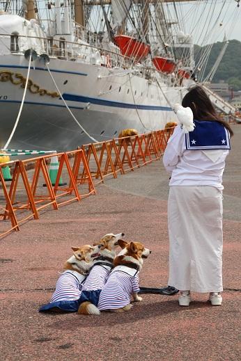 日本丸 2014-5-27-8