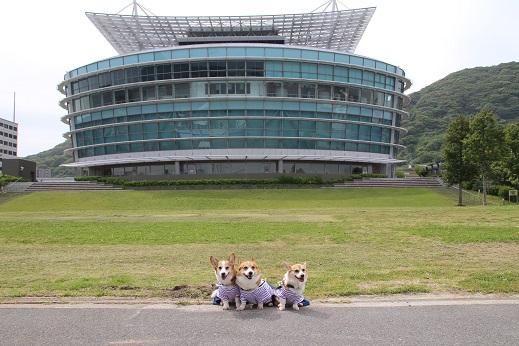 日本丸 2014-5-27-11