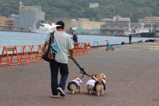 日本丸 2014-5-27-13